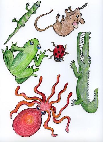 random animals for an animal alphabet